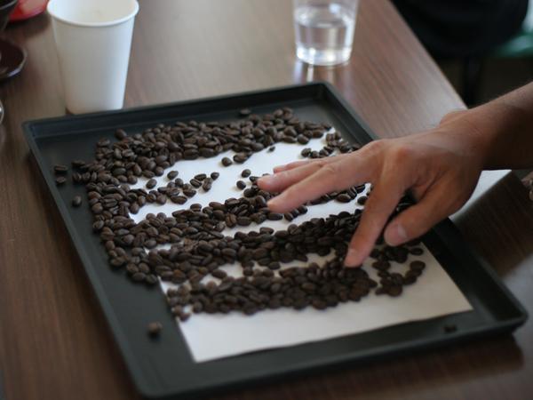 コーヒー豆のハンドピック